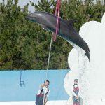 マリンピア日本海のイルカショー