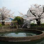 久地円筒分水の桜:2021年3月27日